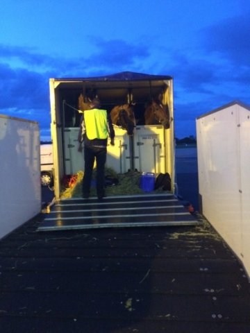 horses in airplane box stall