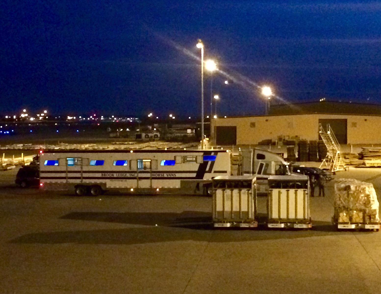 Brook Ledge horse van at airport at night
