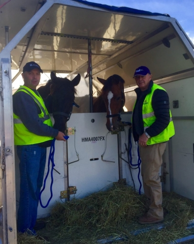 horses in air box stall with professional grooms