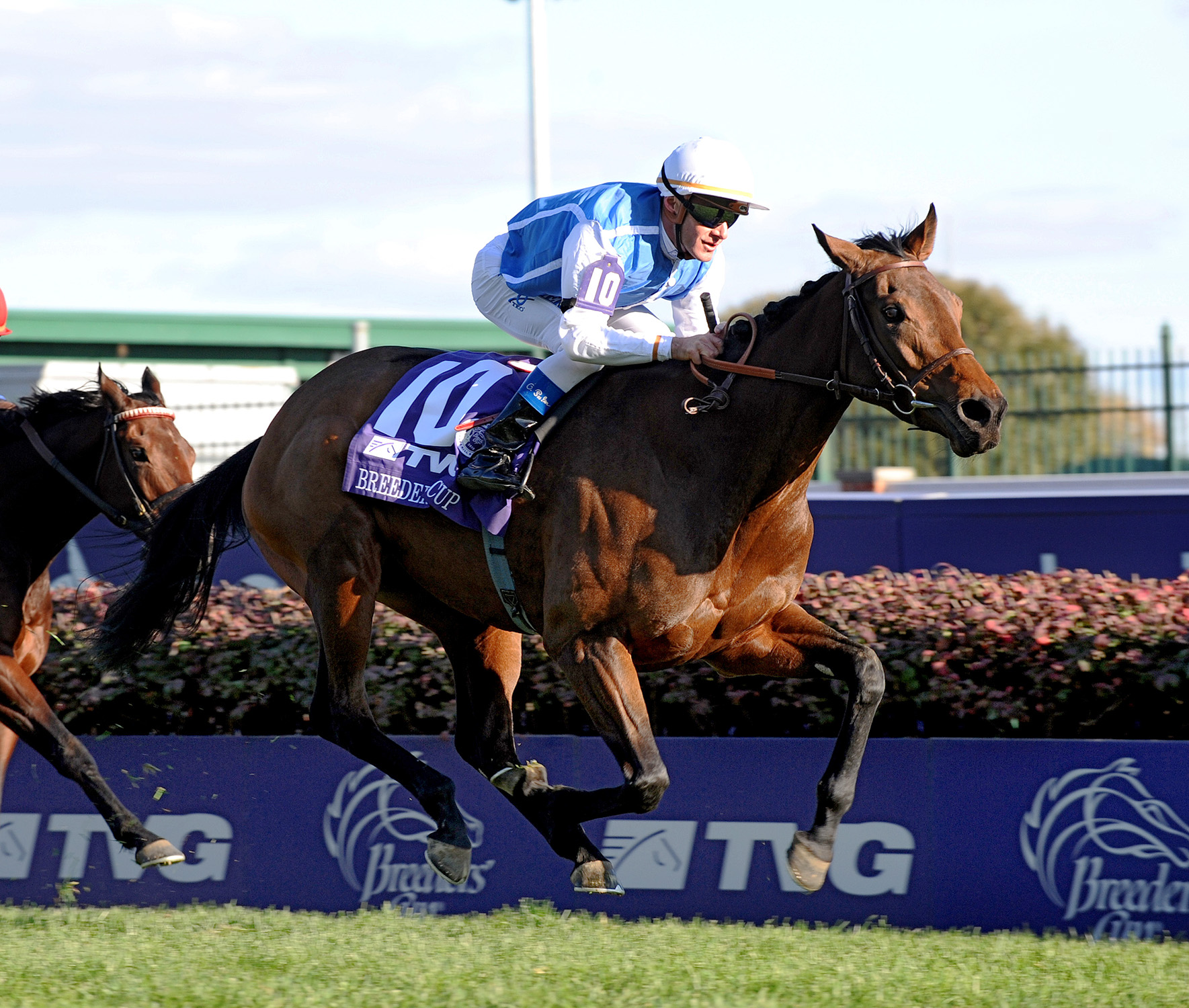 Goldikova and jockey Olivier Peslier racing in Breeders Cup Mile