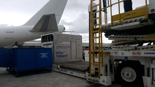 horse being loaded onto airplane