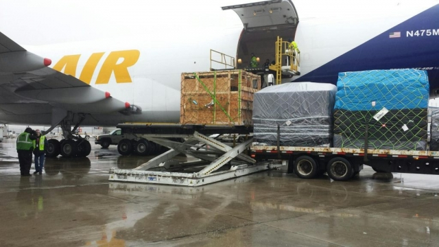 horses being loaded on airplane for flight