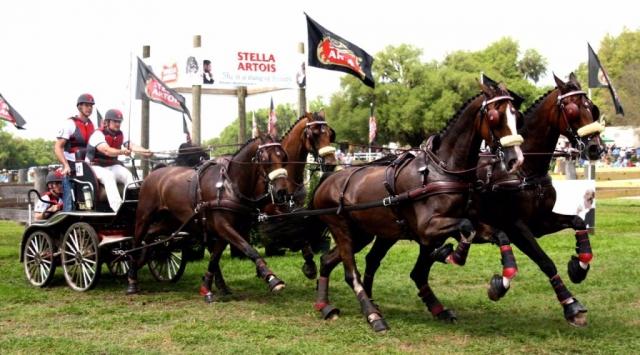 Chester Weber four-in-hand horse team