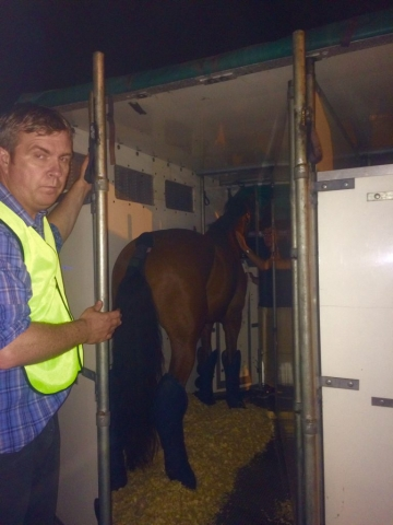 flight grooms with horse in airplane box stall