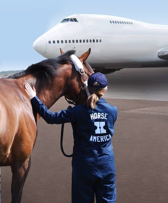 horse america groom with horse and plane